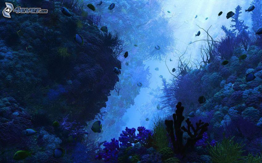 morskie dno, koralowe ryby, koralowce