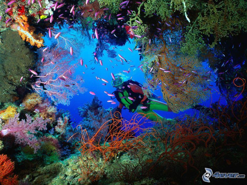 morze koralowe, nurek