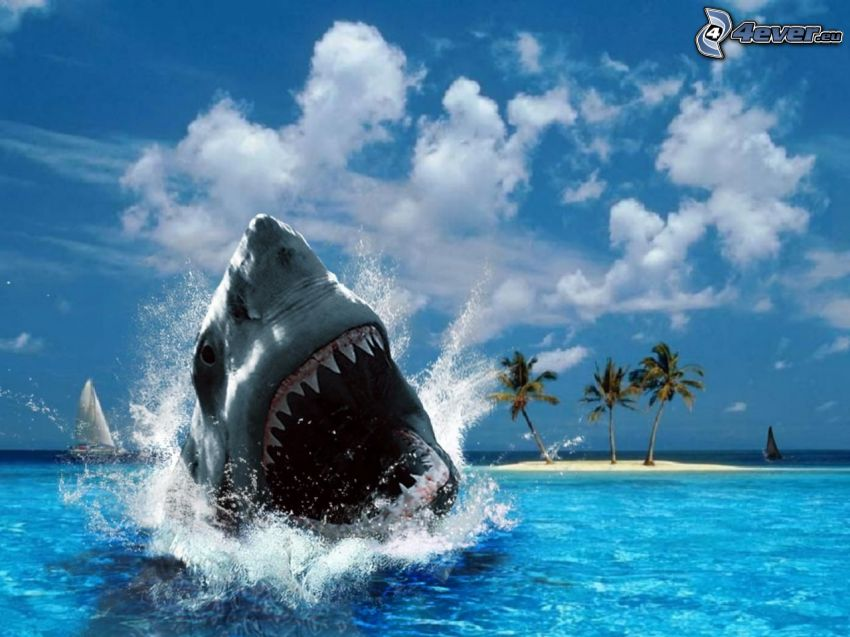rekin, morze, wyspa, palmy