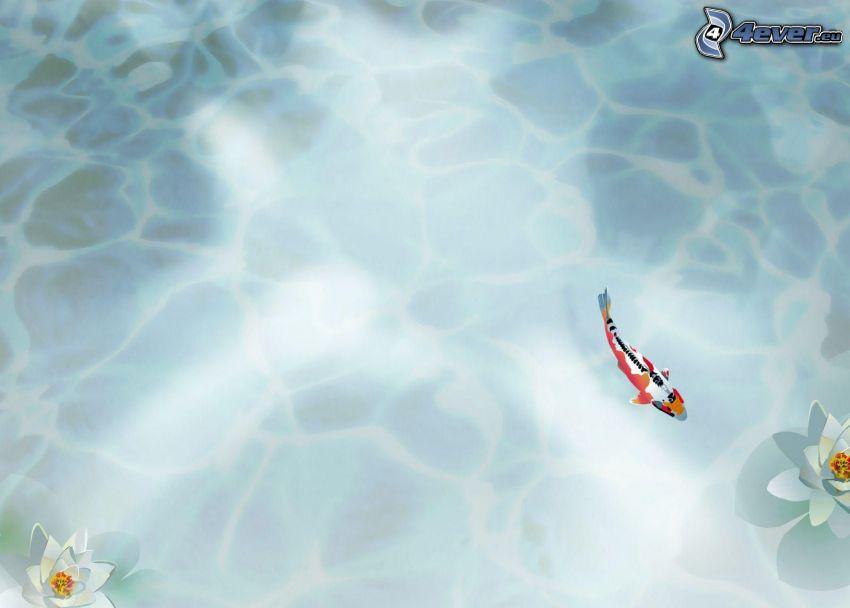 ryba, lilie wodne, woda