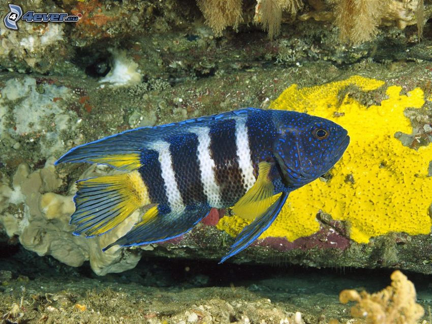 ryba, morskie dno
