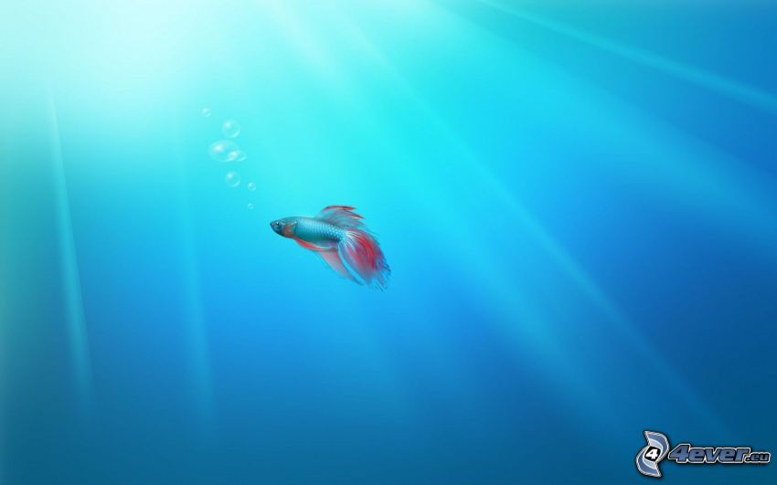 ryba, morze