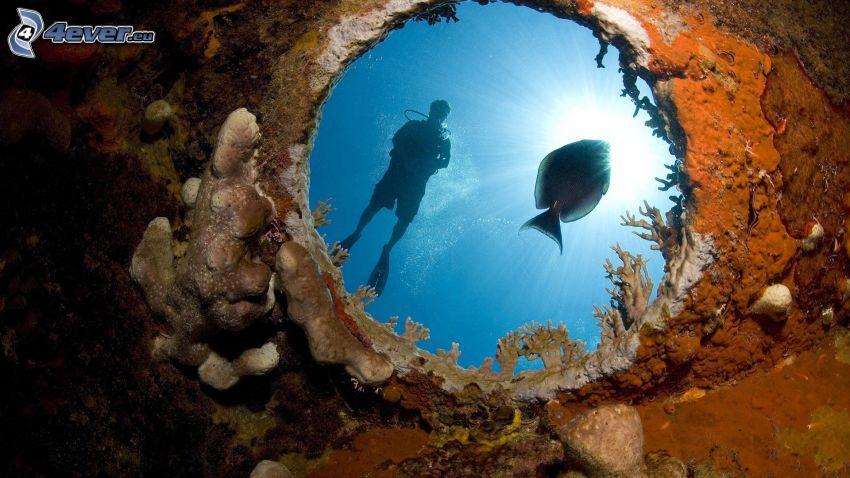 ryba, nurek, dziura