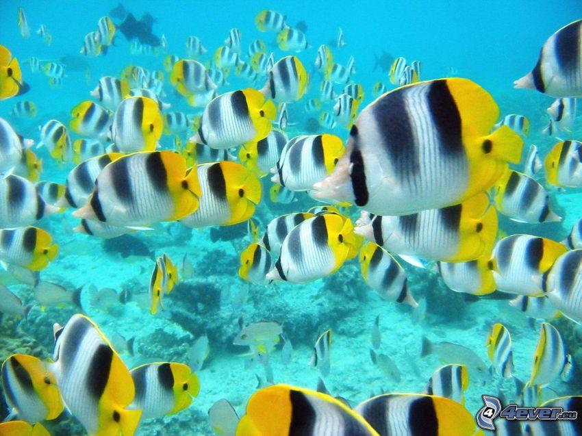 rybki, morskie dno