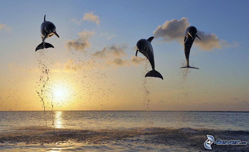 skaczące delfiny, zachód słońca, morze
