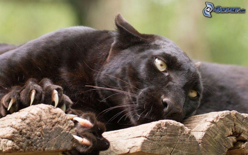 czarna pantera, drewno