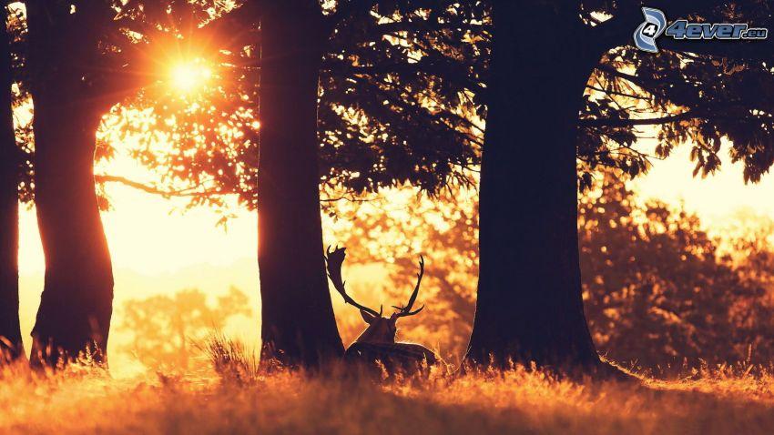 jeleń, słońce, drzewa