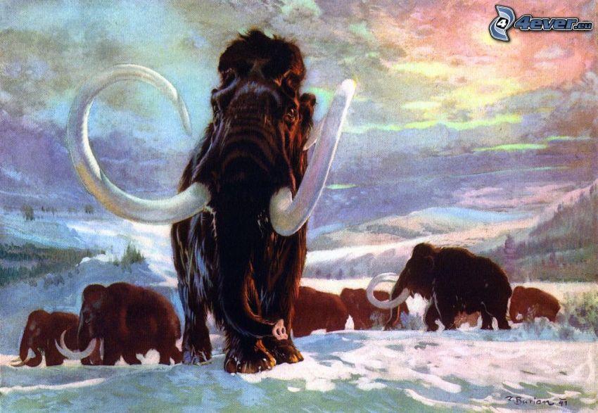 mamuty, śnieg