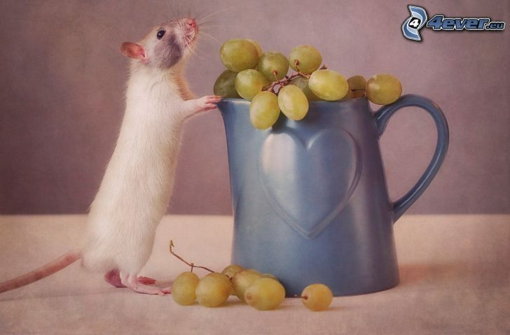 mysz, winogrona, kubek