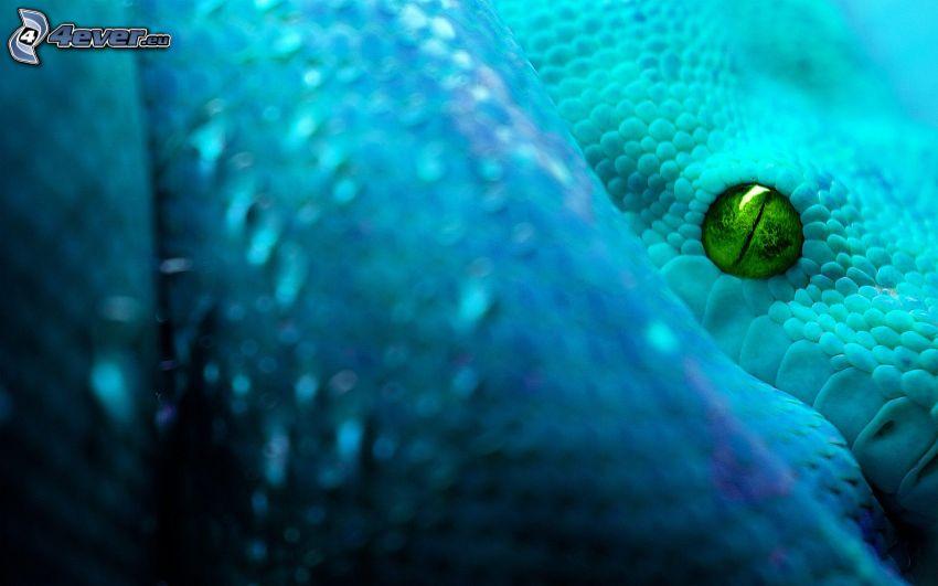 niebieski wąż, zielone oko