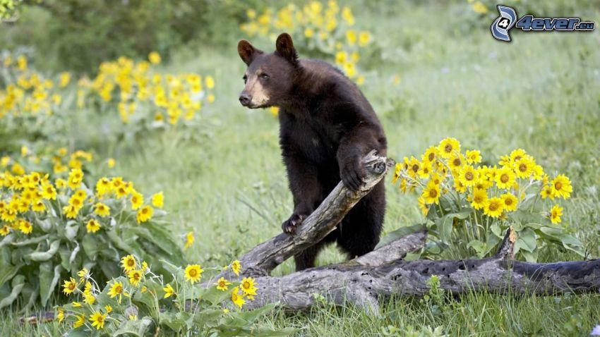 niedźwiedź, drewno, żółte kwiaty