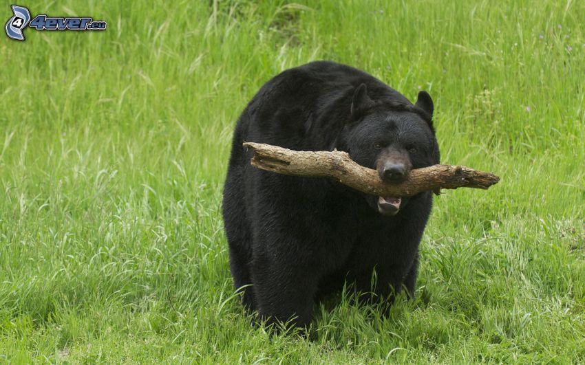 niedźwiedź czarny, drewno, zielona trawa