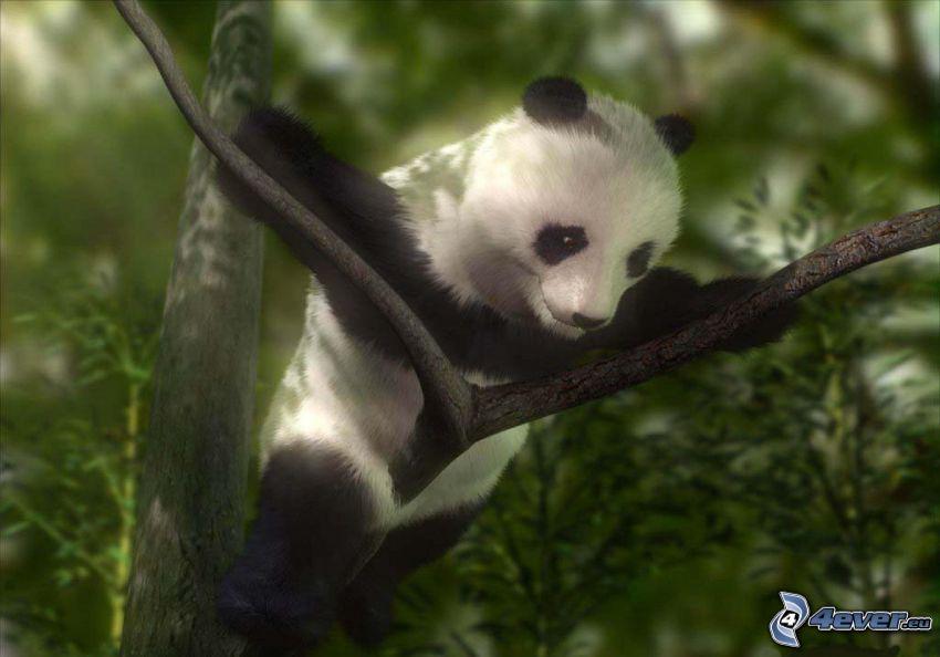 panda, młode, konar