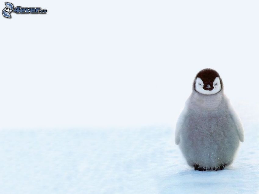 pingwiniątko