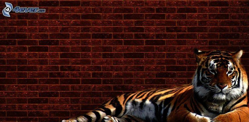 tygrys, ceglany mur