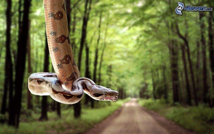 wąż na drzewie, chodnik przez las