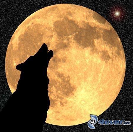 wyjący wilk, sylwetka wilka, pełnia, pomarańczowy księżyc