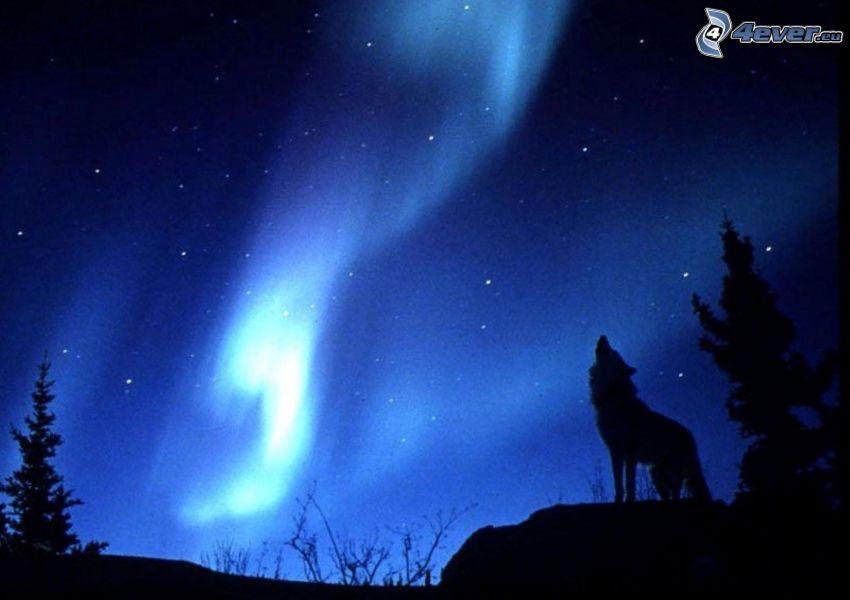 wyjący wilk, sylwetka wilka, zorza polarna