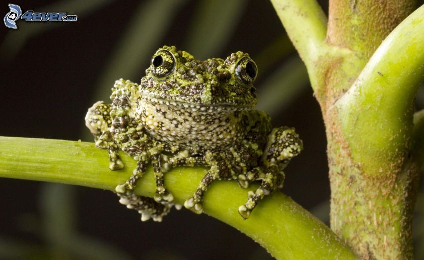 żaba, roślina