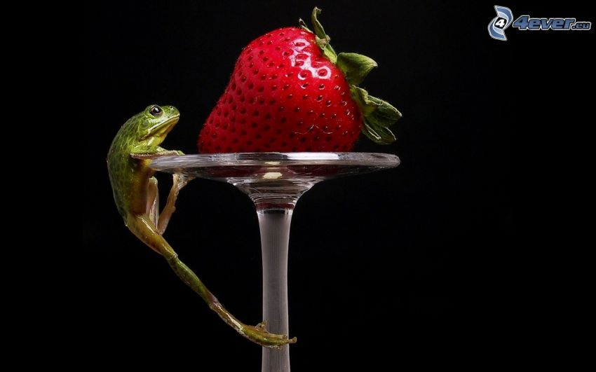 żaba, truskawka, szklanka