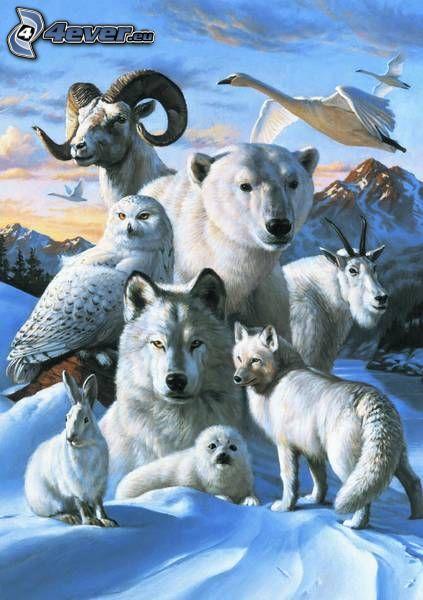 zwierzęta, zima, zając, niedźwiedź, wilk, łabędzie, kozica, sowa