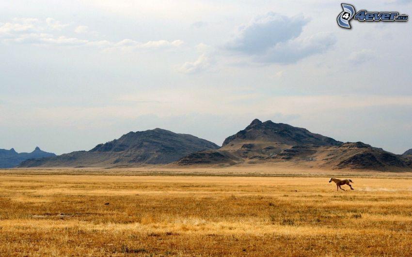 brązowy koń, bieg, pole, wzgórza