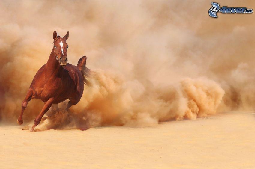 brązowy koń, bieg, pył