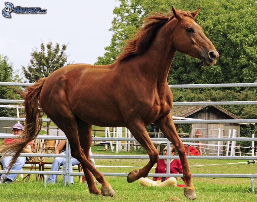 brązowy koń, galop, płot