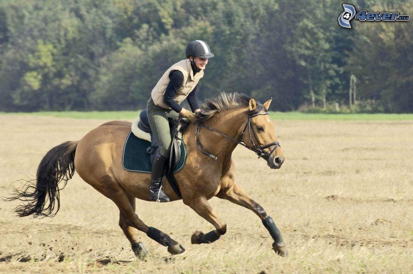 brązowy koń, jeździec