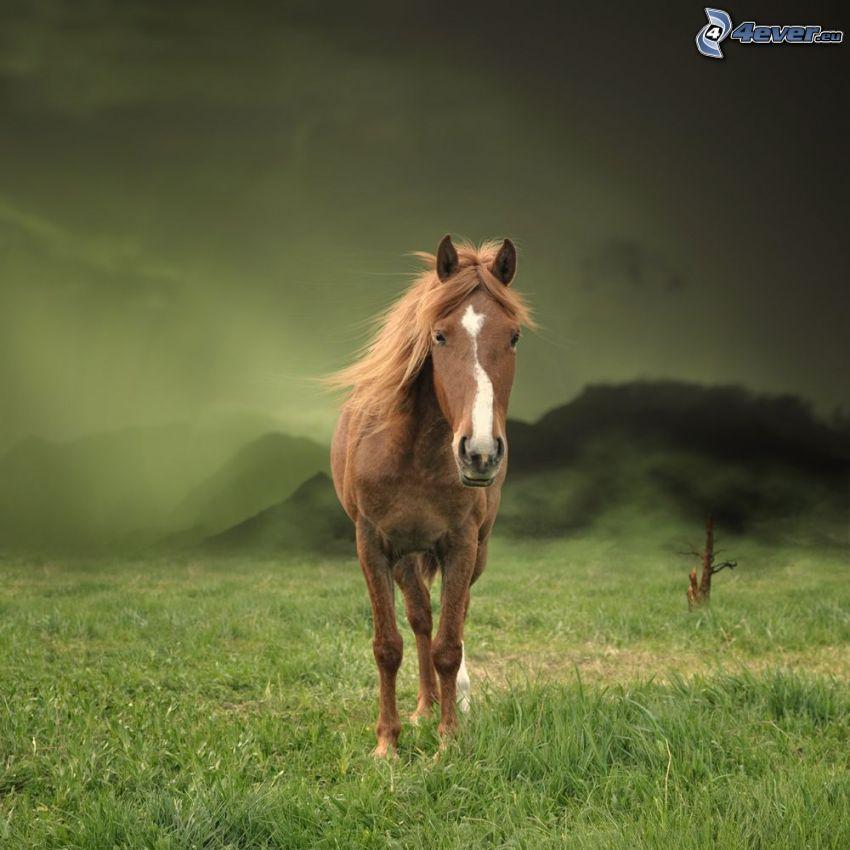 brązowy koń, łąka