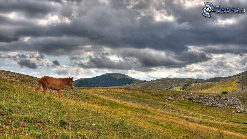brązowy koń, łąki, ciemne chmury