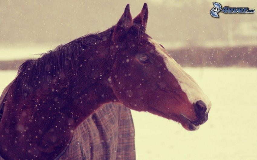 brązowy koń, opady śniegu