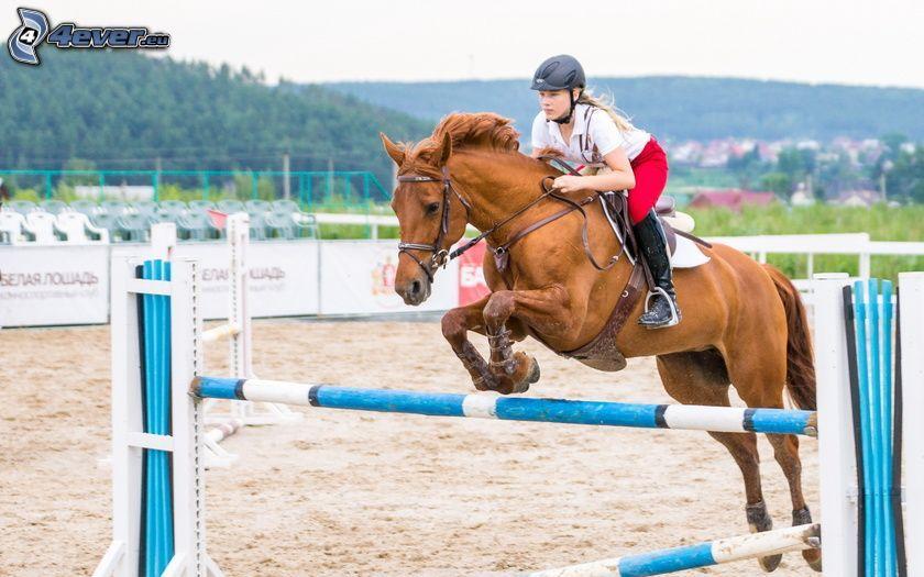 brązowy koń, przeszkoda, jeździec
