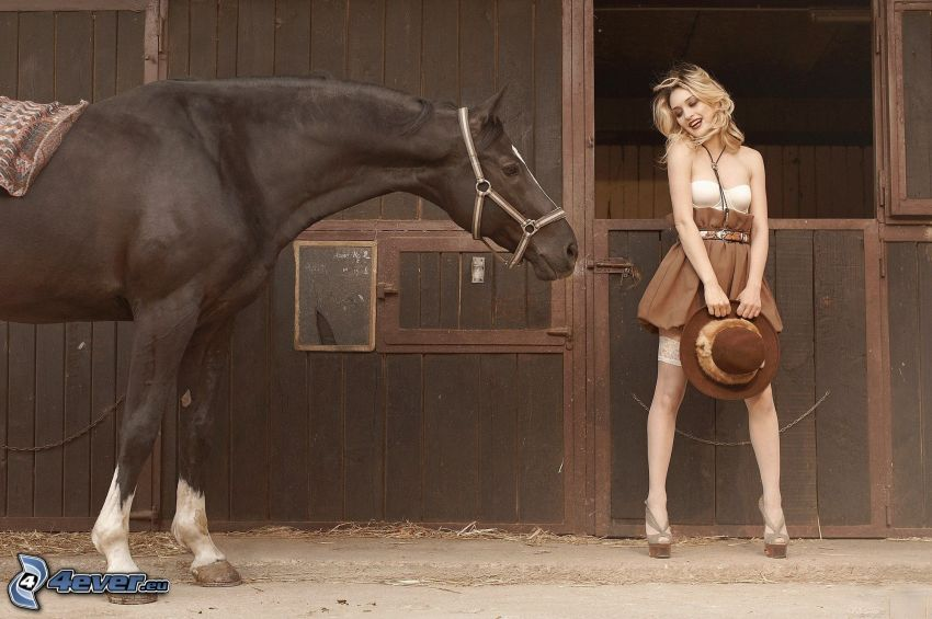 brązowy koń, stajnia, sexowna blondynka