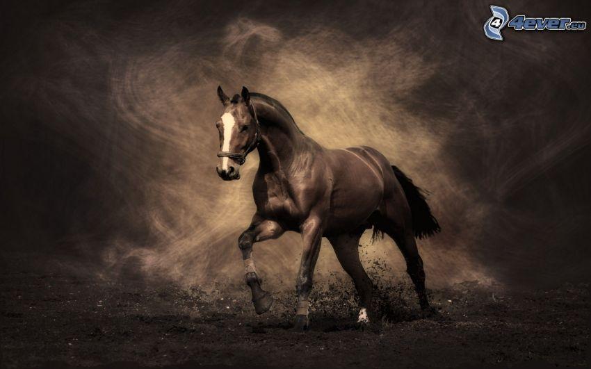 brązowy koń, ziemia