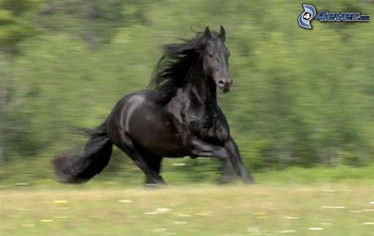 czarny koń, łąka, trawa, galop