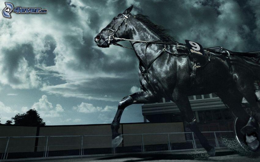 czarny koń, wyścigi, chmury, czarno-białe