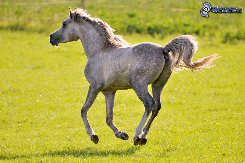 koń, łąka