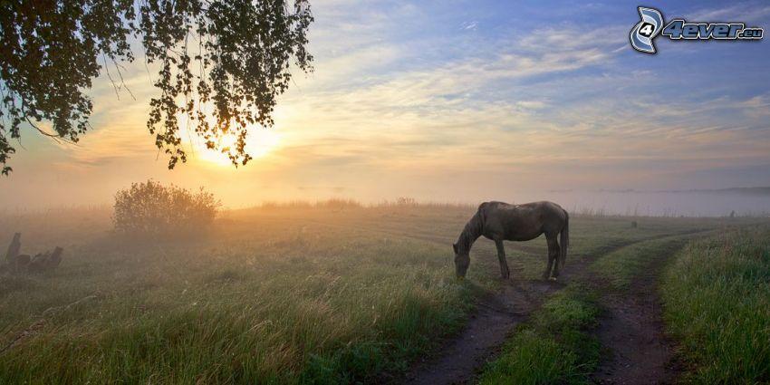 koń, polna droga, trawa, wschód słońca