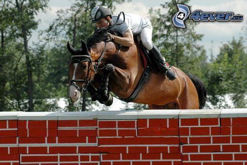 koń, skoki przez przeszkody, przeszkoda, jeździec