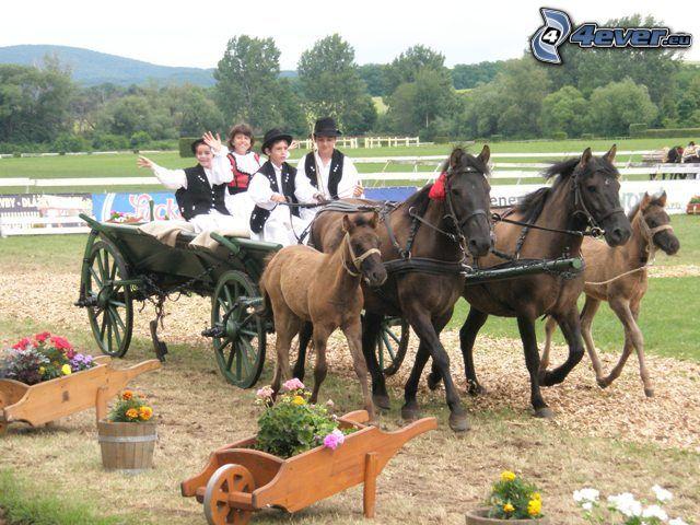 koń w zaprzęgu, kareta, folklor, konie, dziecko, źrebię