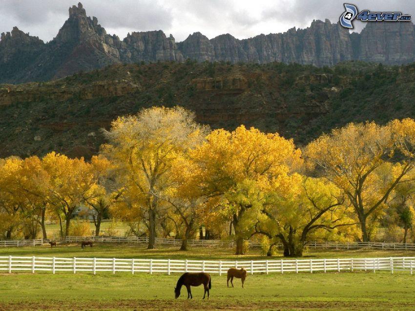konie, gospodarstwo, drewniany płot, skały, żółte drzewa