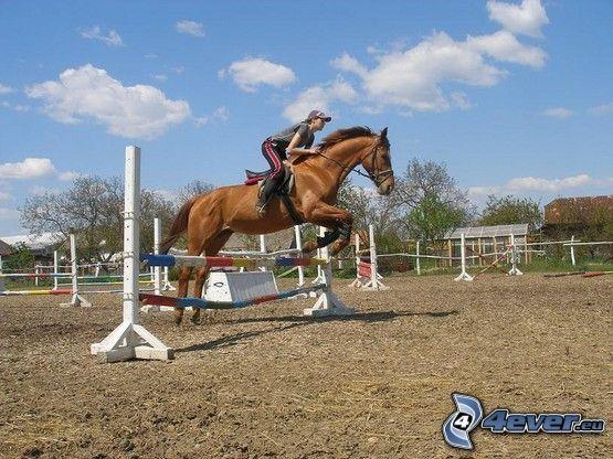skoki przez przeszkody, skok, przeszkoda, koń
