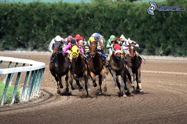 wyścigi, brązowe konie