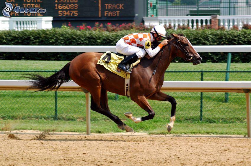 wyścigi, jeździec, brązowy koń