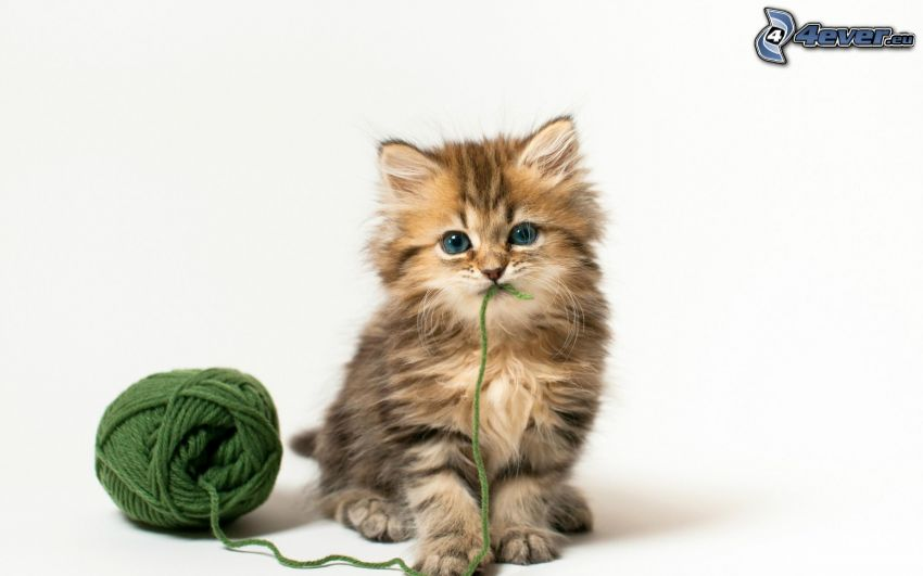 bawiący się kotek, kłębek, fala