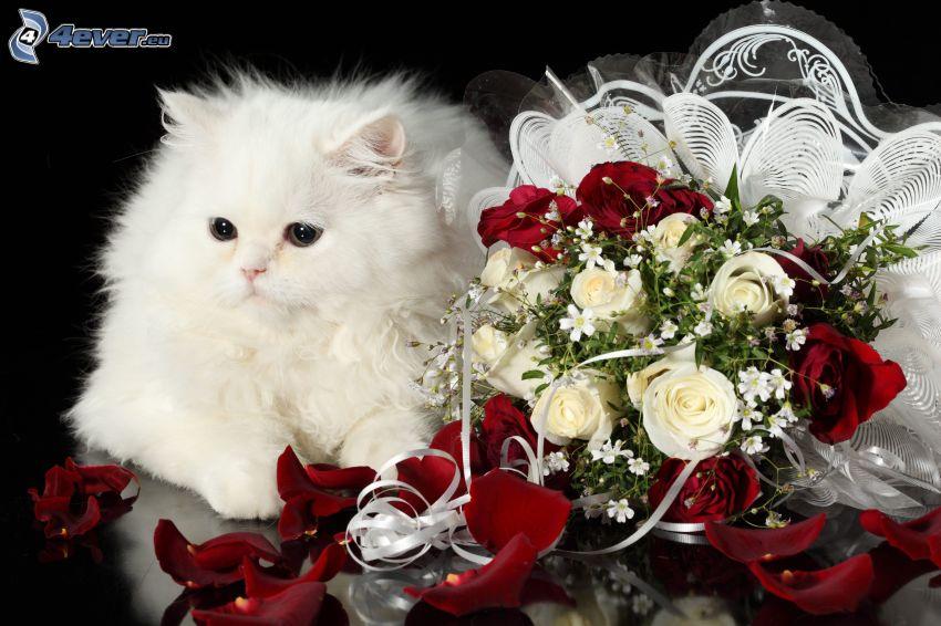 biały kot, bukiet róż