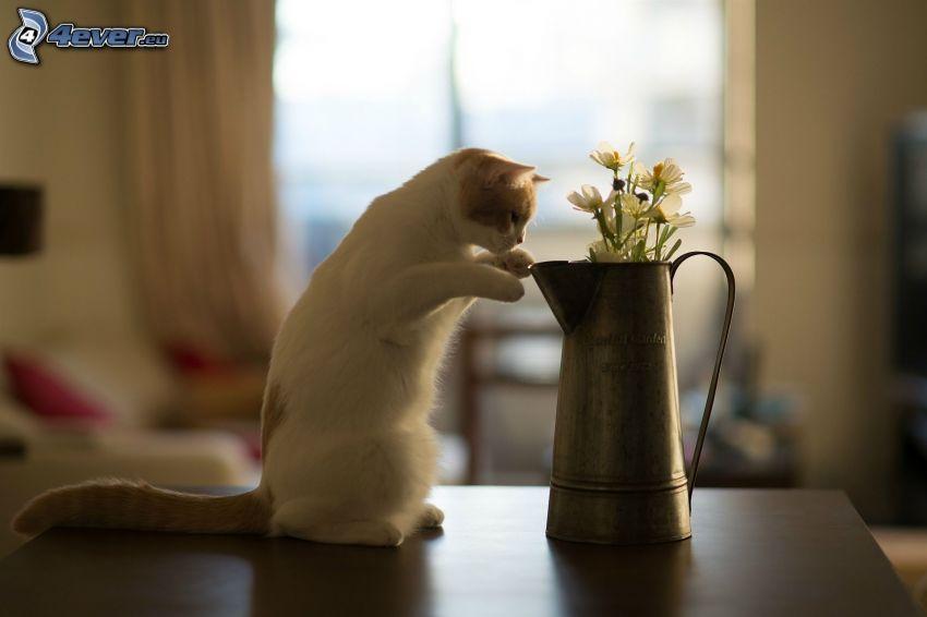 biały kot, polne kwiaty w wazonie