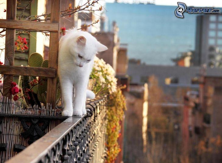 biały kot, poręcz