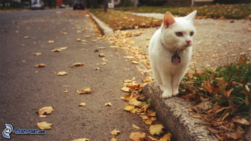 biały kot, ulica, krawężnik, jesienne liście